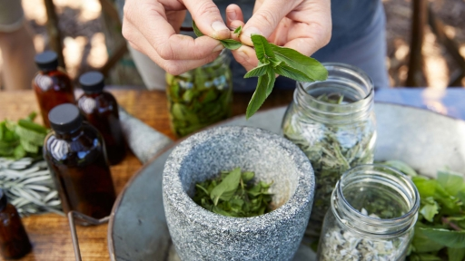 natural plants and herbs in austin texas