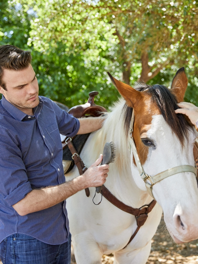 man brushing white and brown horse