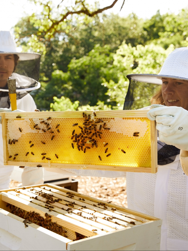 beekeepers at miraval austin resort