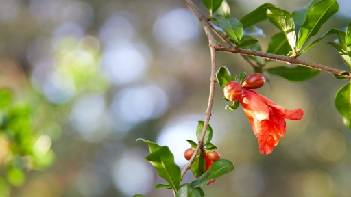 close up of red flower coming off branch