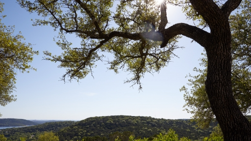 Wide scenic view of tree and surrounding area from Miraval Austin.