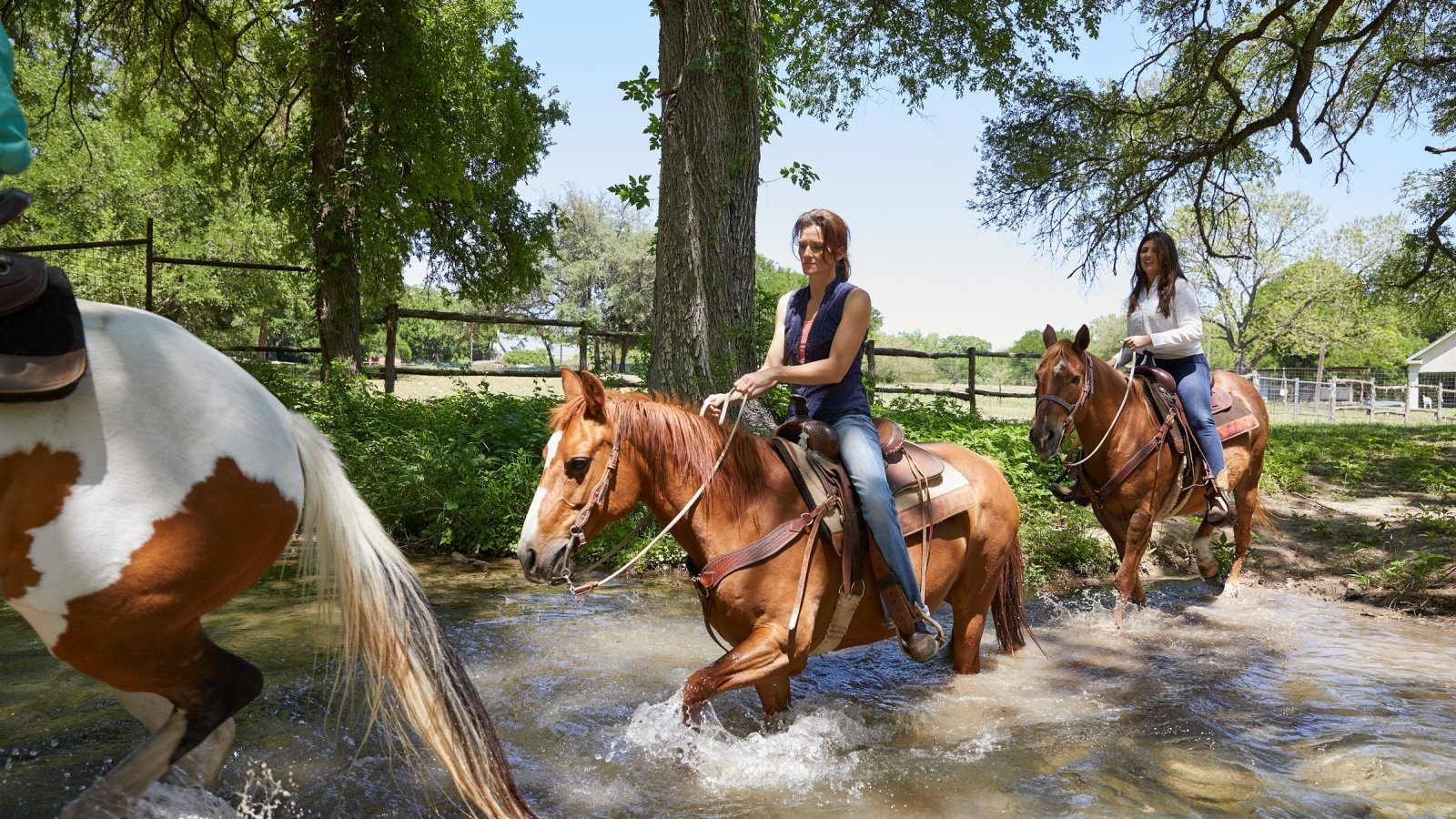 Equine Experiences At Miraval Austin Resort In Texas