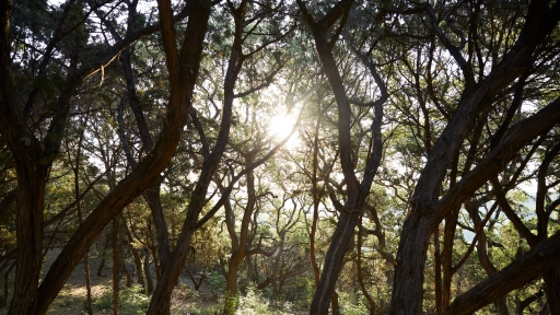 View of the sky from deep in the woods at Miraval Austin.