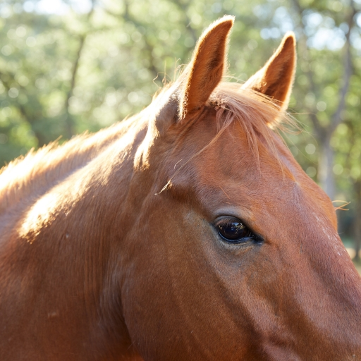 head shot of horse