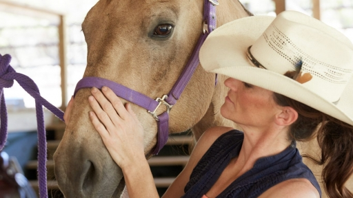 horse with purple harness being pet by women
